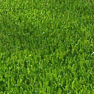 Royal Grass